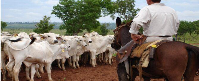 manejo racional de bovinos