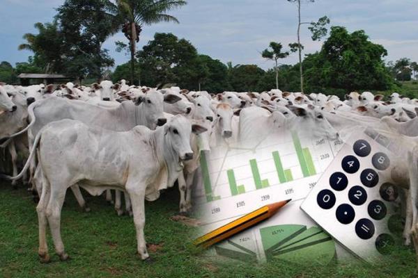 Gestão na pecuária: Chave para o sucesso