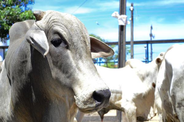 Desafios E Oportunidades Na Pecuária Moderna